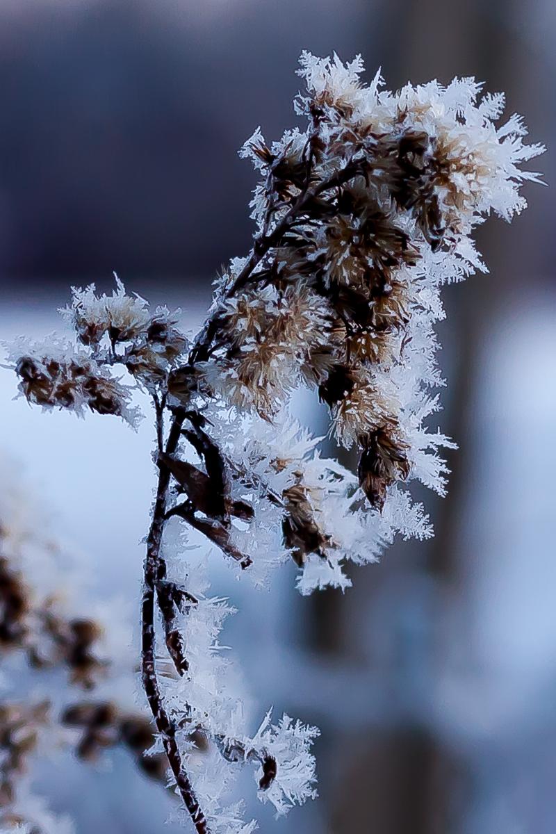 """Winter tales"""