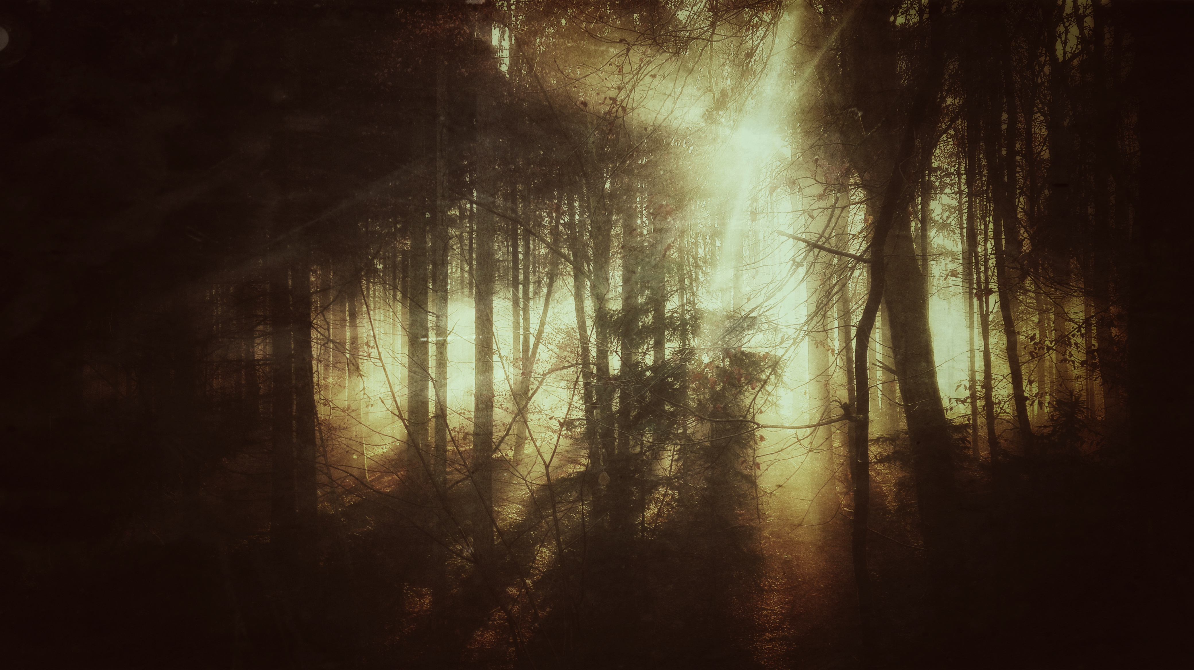 """""""If these trees could talk..."""""""